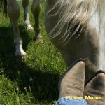 jan meyers horse photo