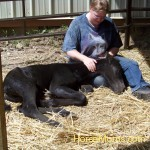 Jennifer Voorhees I have a lot of horse babies. This is my newest one, a purebred Friesian colt born 6/29