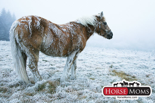 horse in a field covered in snow during a winter snow storm
