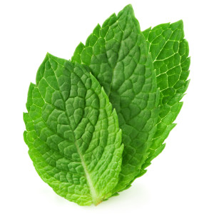 three fresh mint leaves