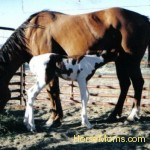 horse mom and baby foal