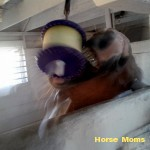 caro clark at horse moms photo of the week