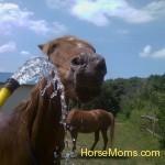 Kathi Wilson Zander Niles loves the water, especially when its hot!