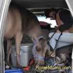 shawna hardin horse mom