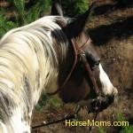 Shirley Paulson TufBar Laramie trail riding