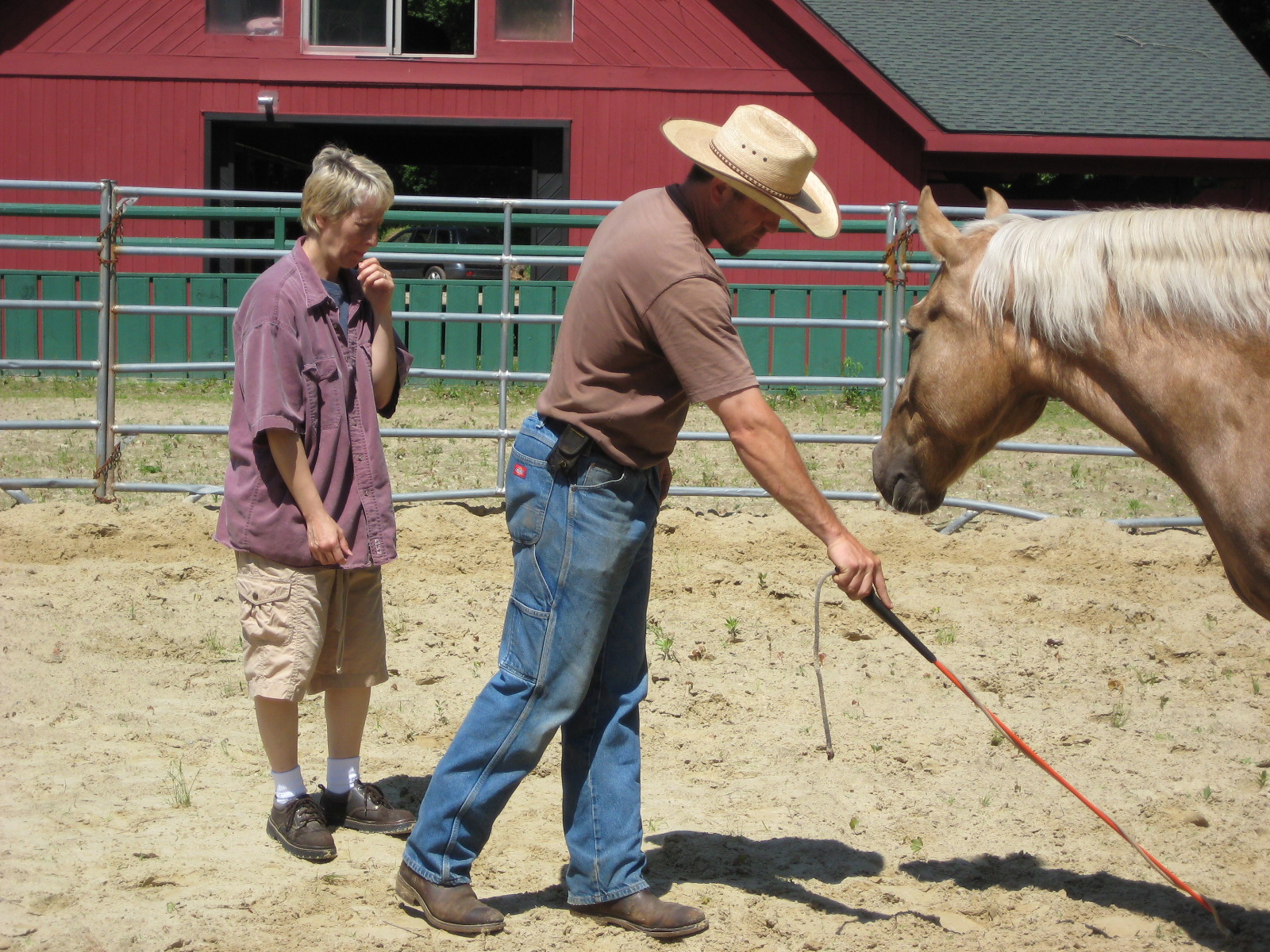 Clicking Joints in Horses – Horse Moms