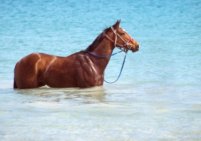 Cleanse-natural detox for horses